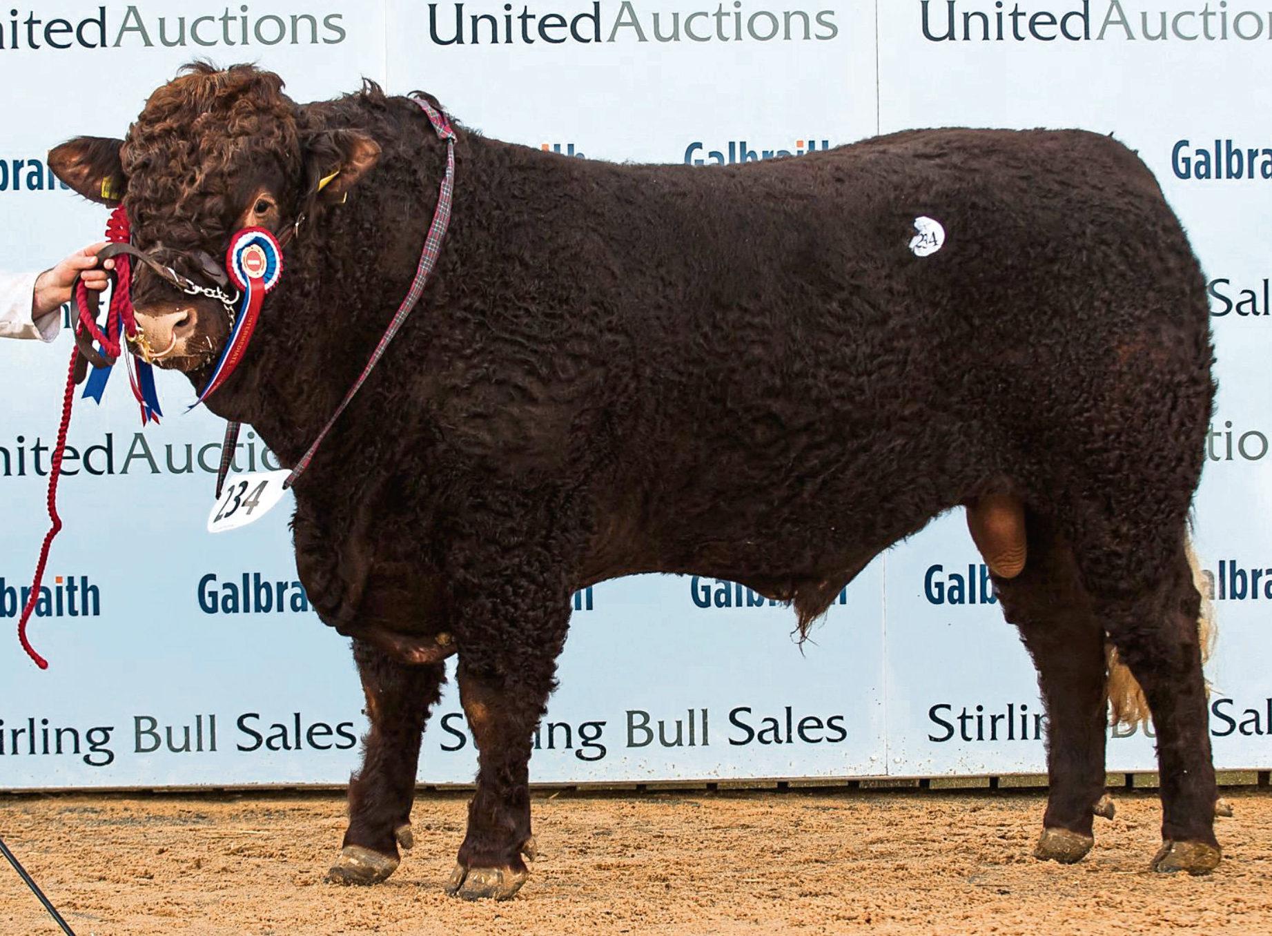 Champion Saler bull, Strathallan Navigator, of Mid Cumbushinnie Farm, Cromlix, Dunblane, raised 8,000gns.