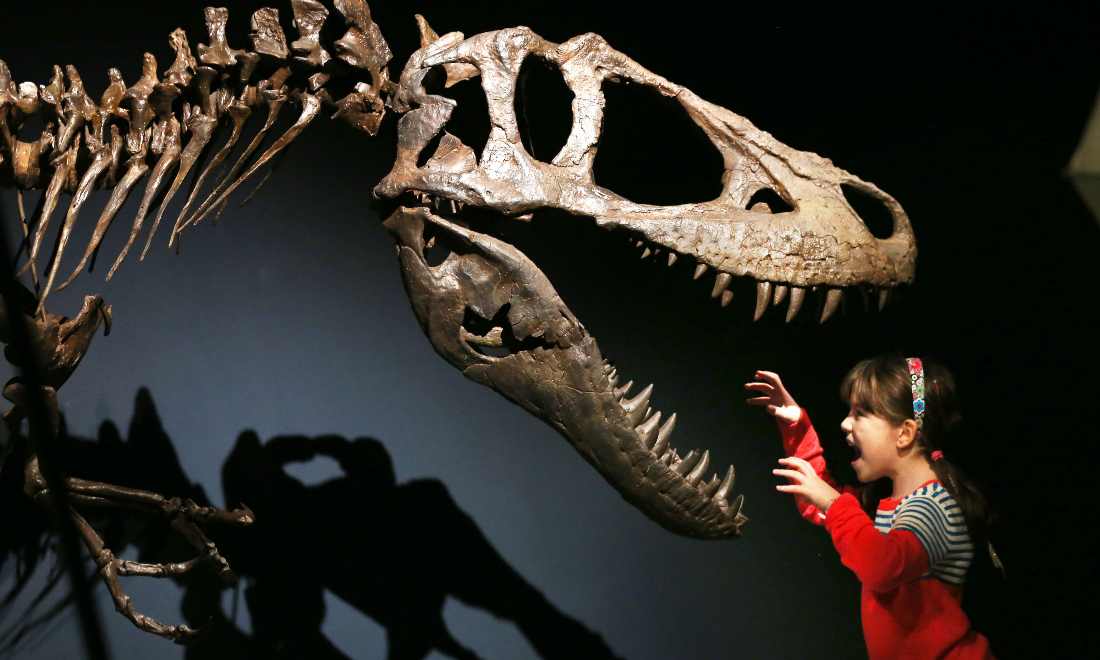 Rosa Connolly takes a close look during a preview of the Tyrannosaurs exhibition at the National Museum of Scotland, Edinburgh.