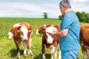 Information will be gathered on farms ahead of online sales.