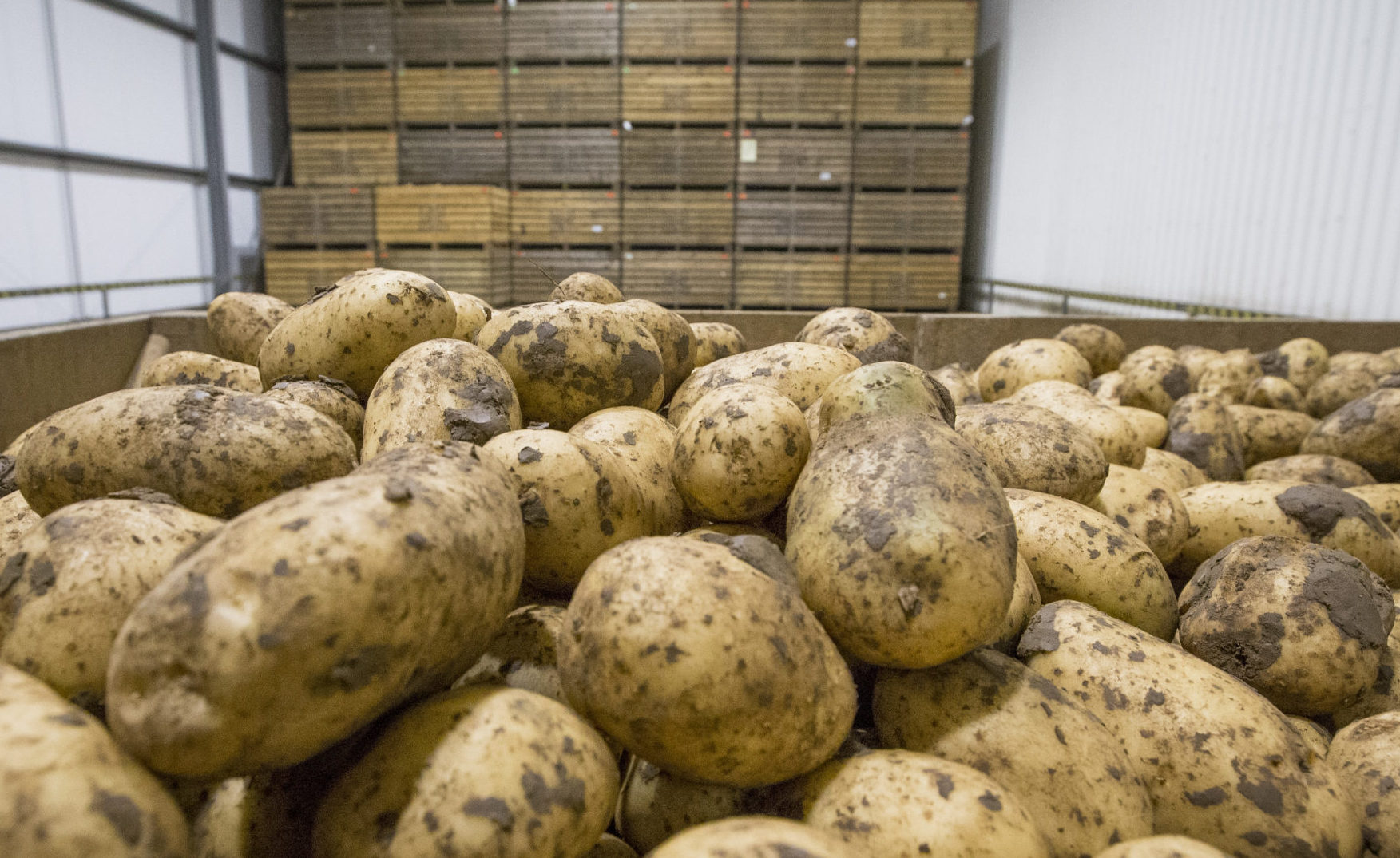 The meeting is open to potato growers and store managers from both the seed and ware sectors.