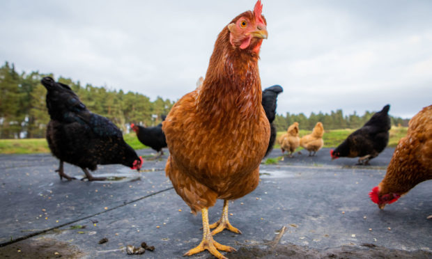 Up to 16,000 birds could be accommodated at a new poultry farm near Crieff.