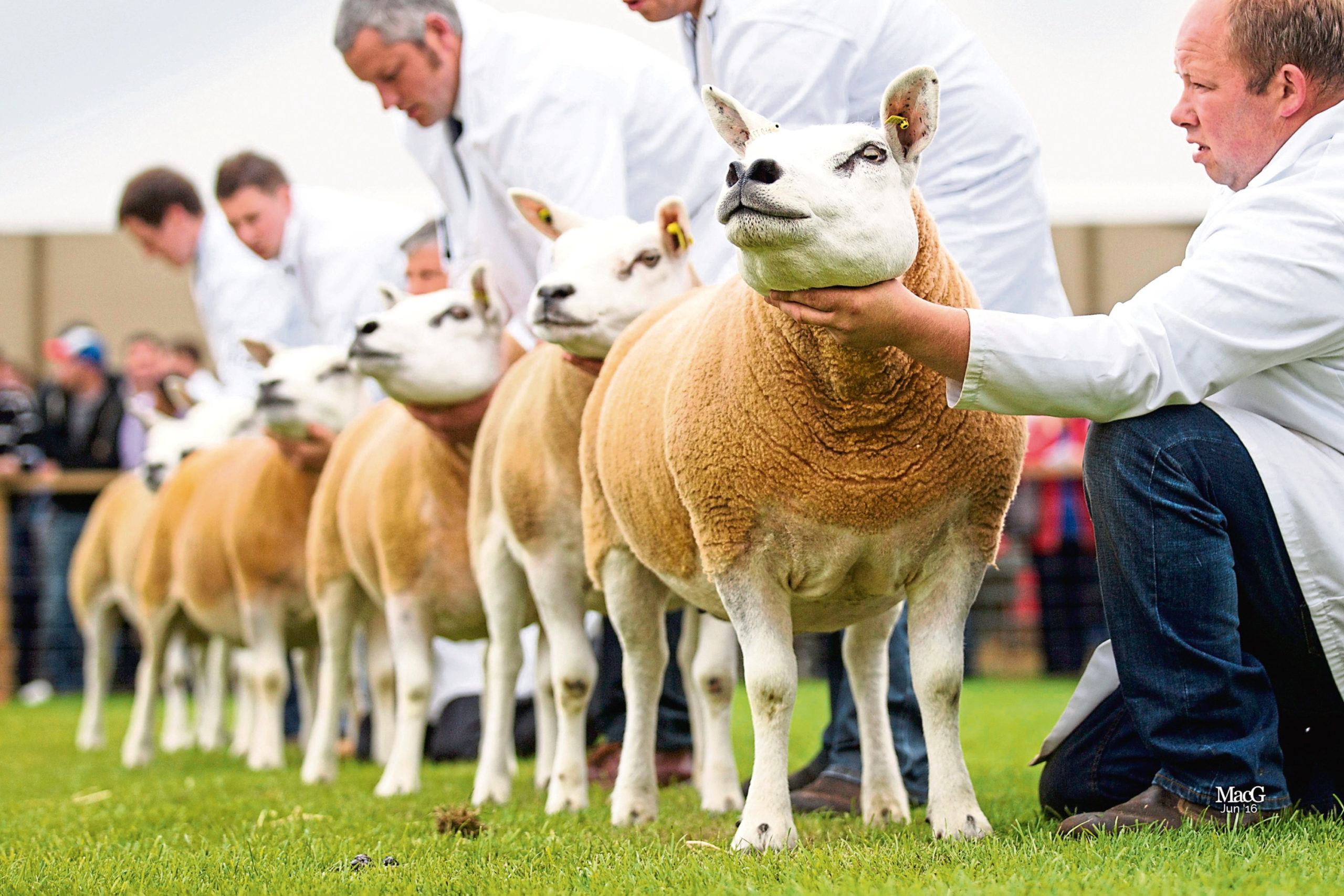 The Royal Highland Show  has been cancelled due to the coronavirus pandemic.