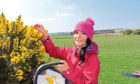 Gayle forages for gorse flowers.