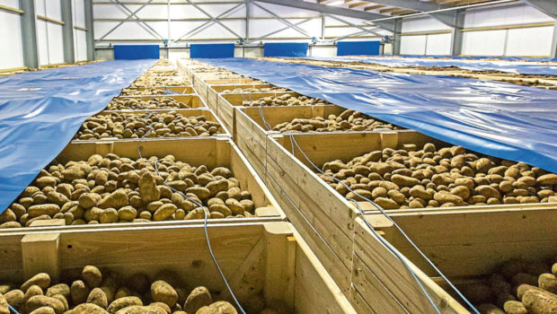 The versatility and value of potatoes will be highlighted in the campaign by AHDB.