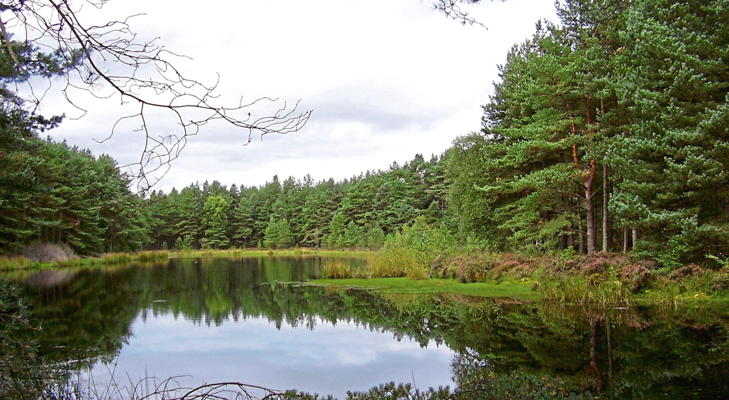 Bordie Loch in Devilla Forest.