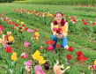 Kym McWillian of Haughhead Farm with pick-your-own flowers