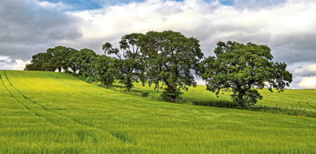 Weather conditions  have caused problems for arable farmers.