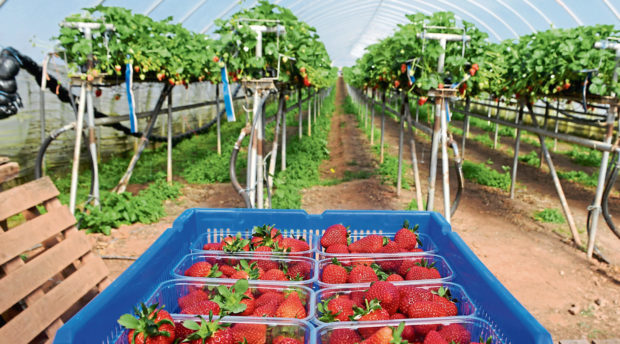 Angus Soft Fruits grower James Porter said they have commitments to foreign and local workers.