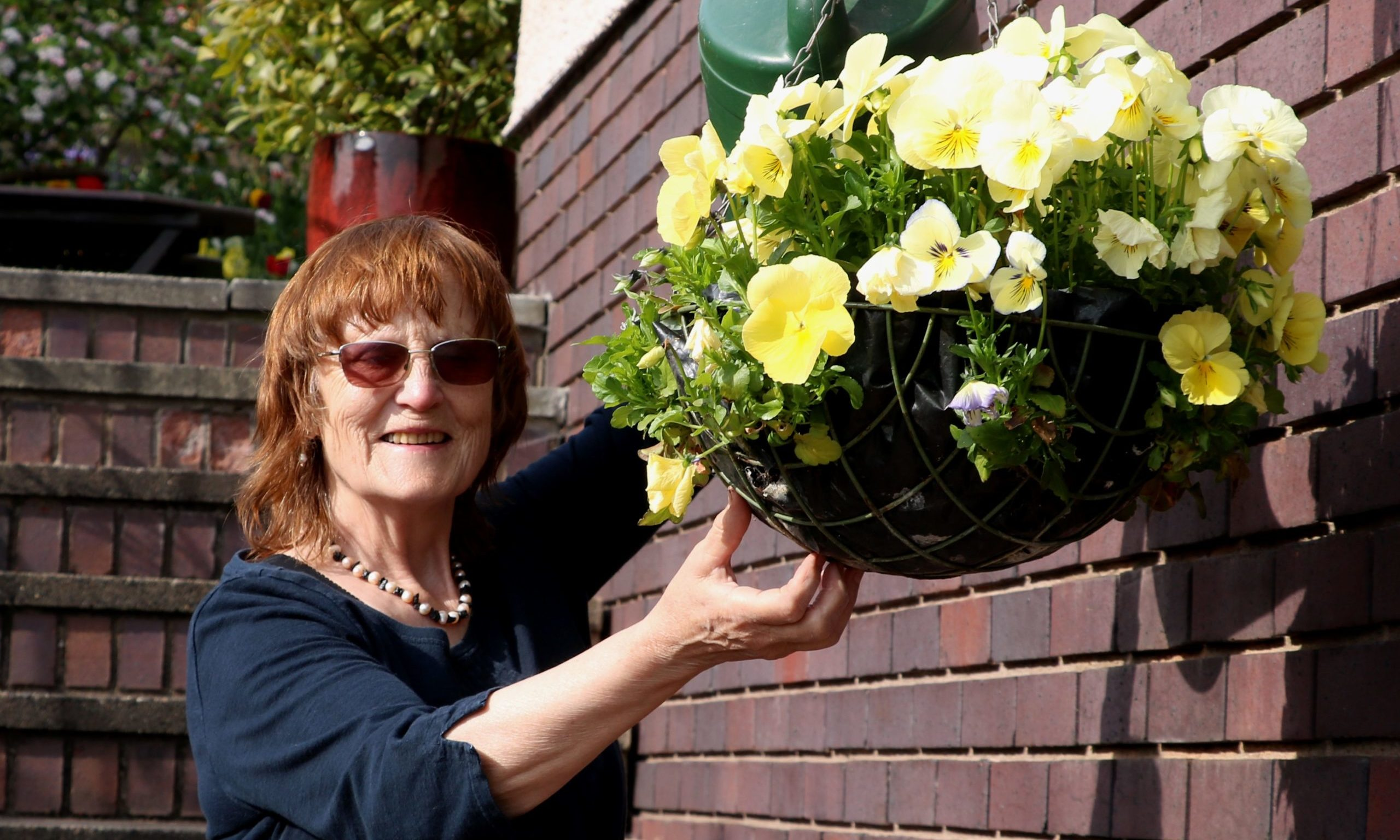 Anna watering the pansies