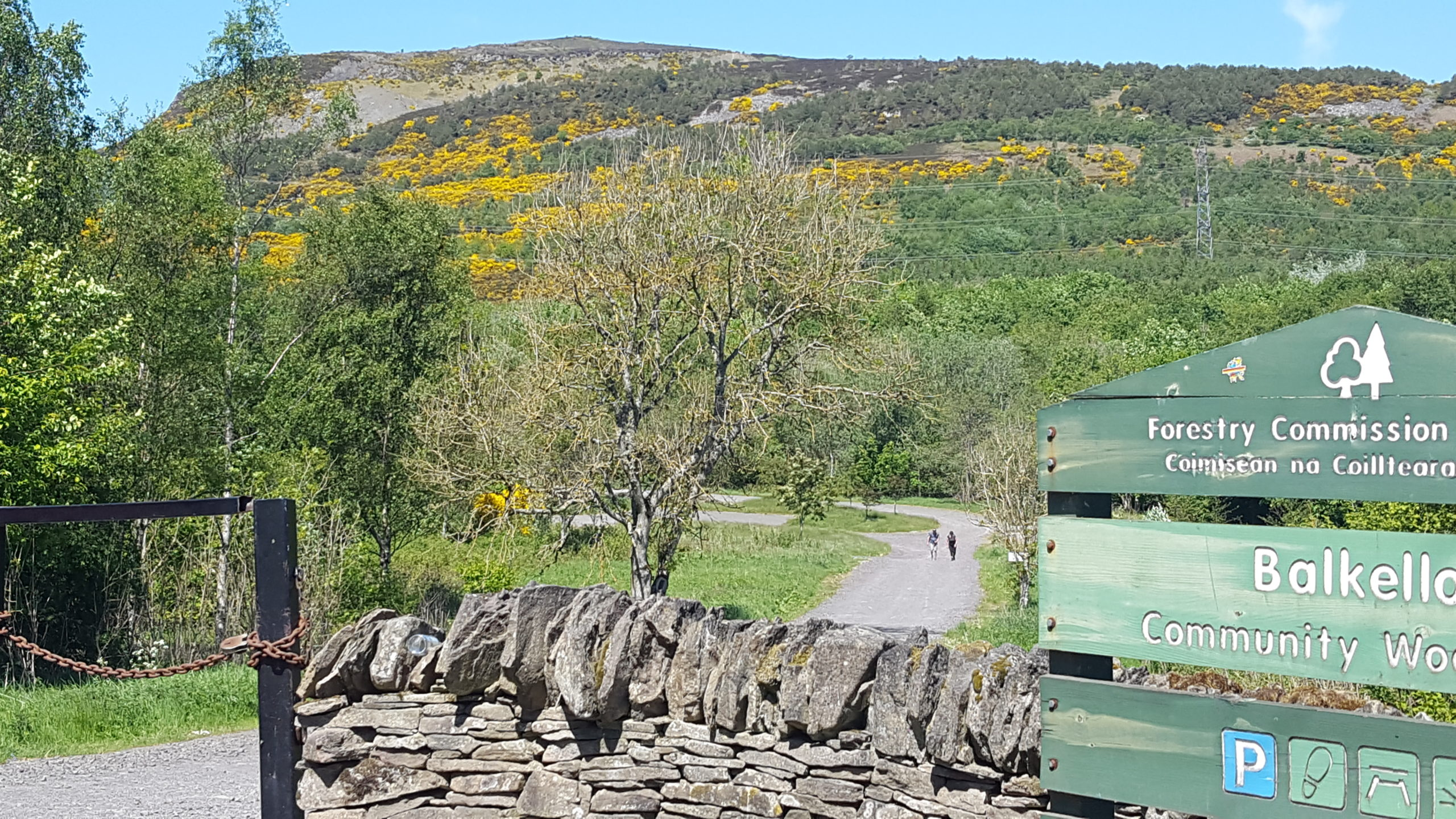 Balkello Community Woodland near Dundee.