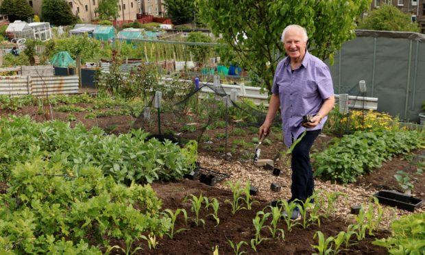 John plants his sweet corn May 2020