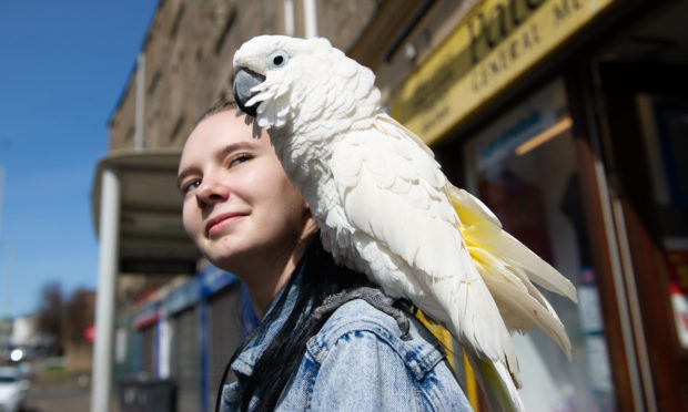 Tayside Cleaning Solutions, Terry O'Shea brings his parrot 'Shortie' to work every day - Nicole Hamilton meets Shortie.