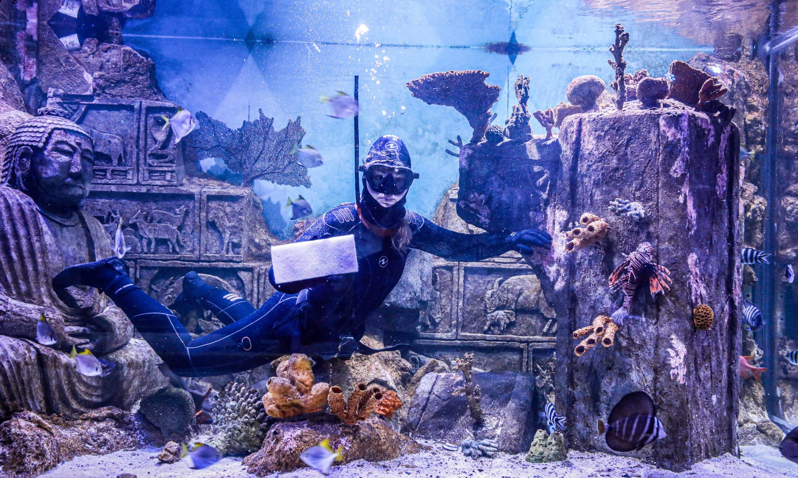 Diver Kate Cooper cleaning the tropical marine tank at Deep Sea World.