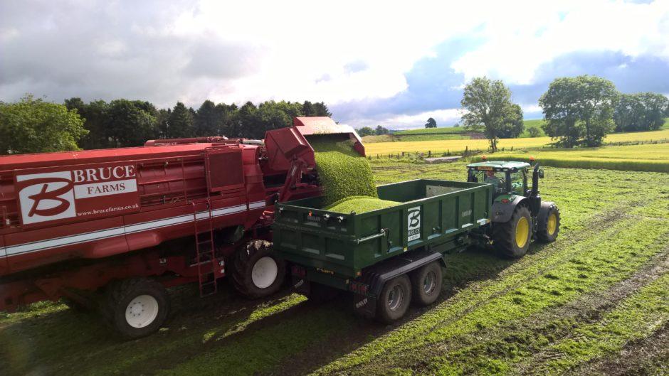 Pea production on a farm in Scotland.