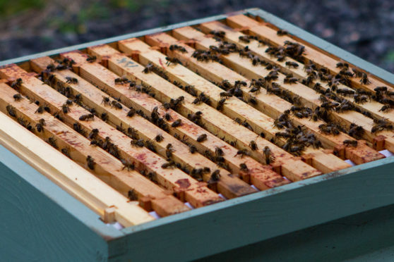 Infected beehives were found at a Perthshire apiary.