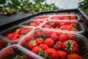 Most Scottish fruit growers hope to get their usual seasonal workers by the middle of June.