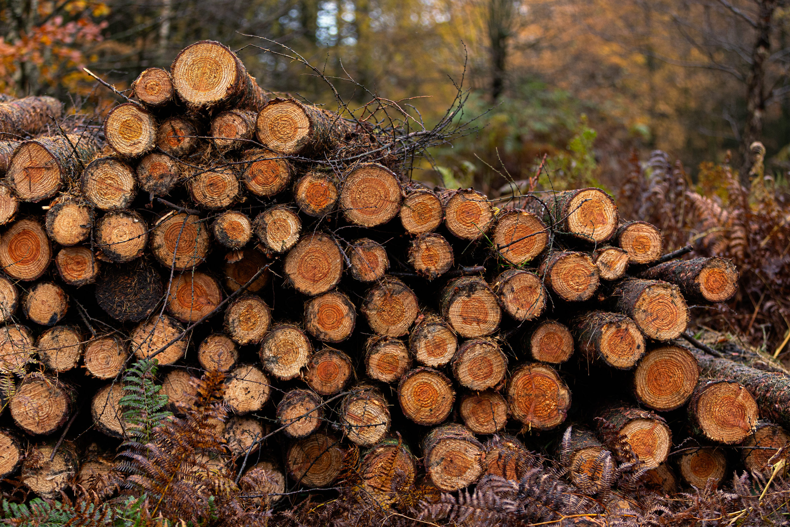 Timber harvesting has continued during the crisis, but at reduced levels.