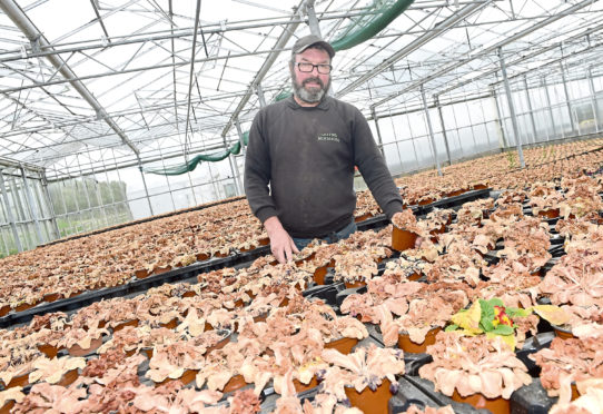 Donald Green in one of his glasshouses.