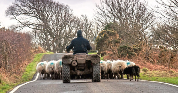 Only 26% of farmers in Scotland said they felt positive about the post-Brexit landscape, according to a survey..