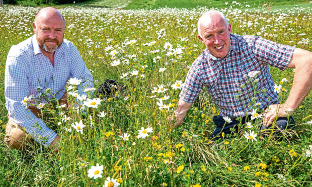 (Left) Alexander Moncrieff and (right) Head of Estates, Gordon Fowler examine the growth and development of the wild flowers, margind and hawthorn hedgerows.