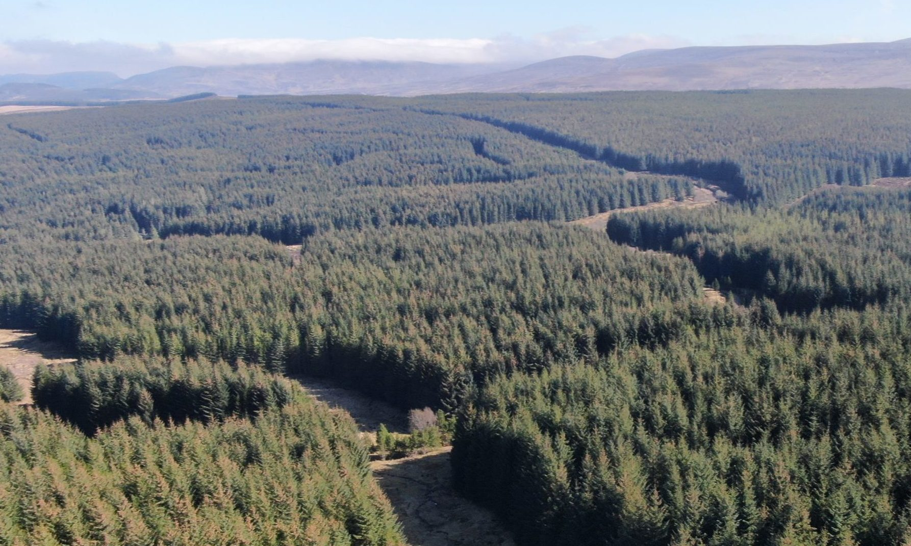 Badvoon Forest, a 728-hectare commercial conifer forest, which is on the market for offers over £5,750,000.
