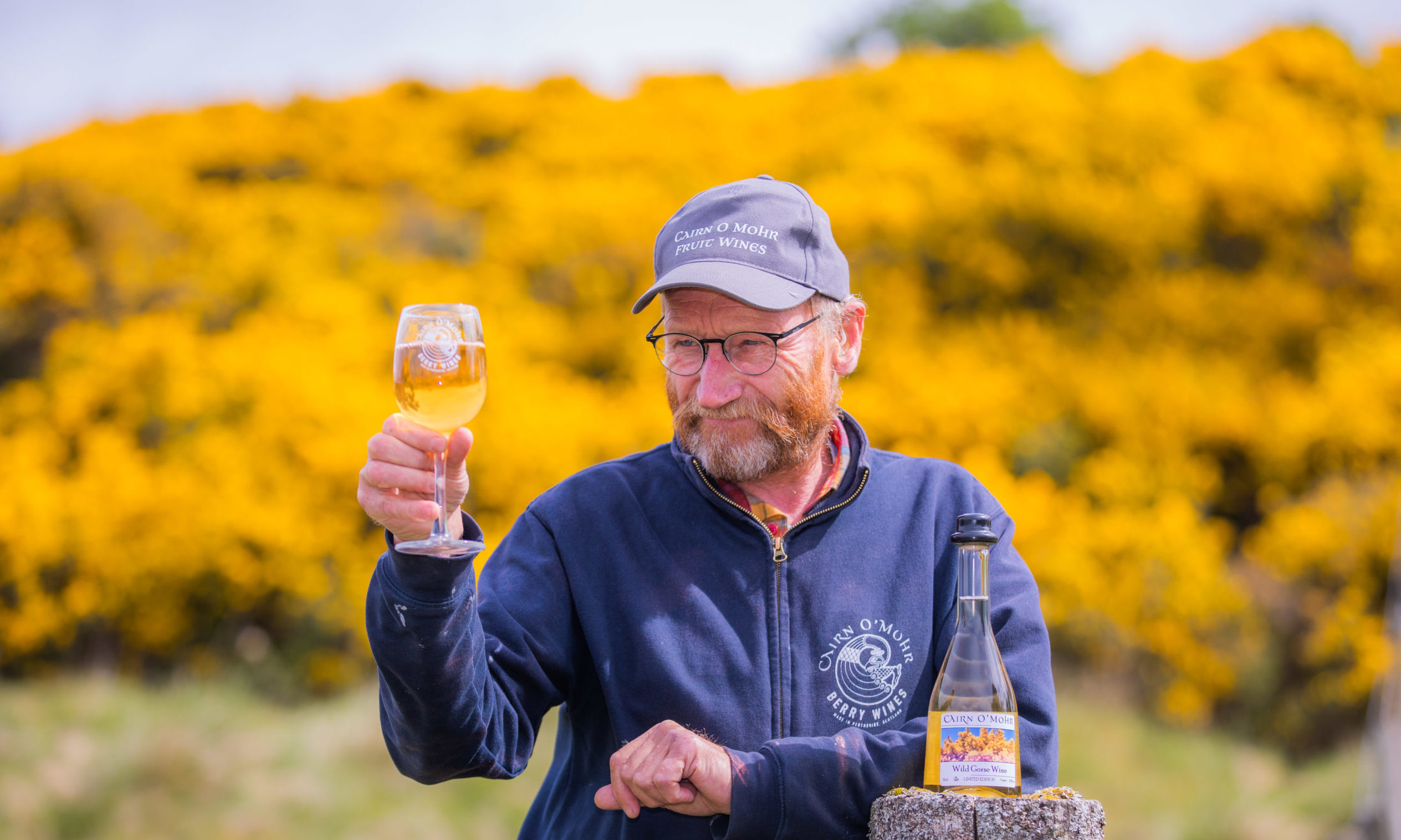 Ron Gillies (Cairn O' Mohr) with some of his product alongside local gorse bushes on the Sidlaws, near Rait.