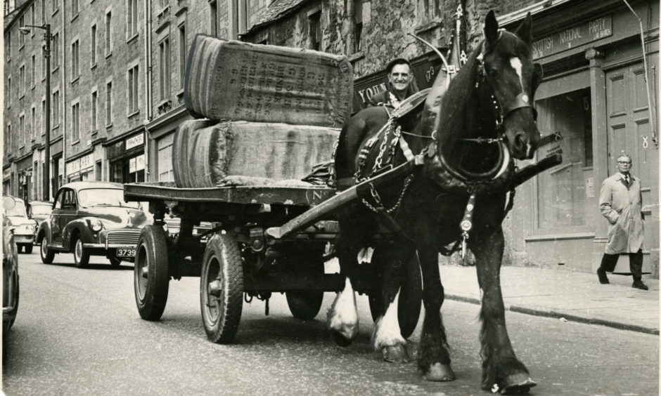 Paddy, Dundee's last work horse, with his carter, Chic Donaldson, on October 31 1968.