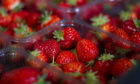 Some lucky milk delivery customers will receive a free punnet of strawberries.