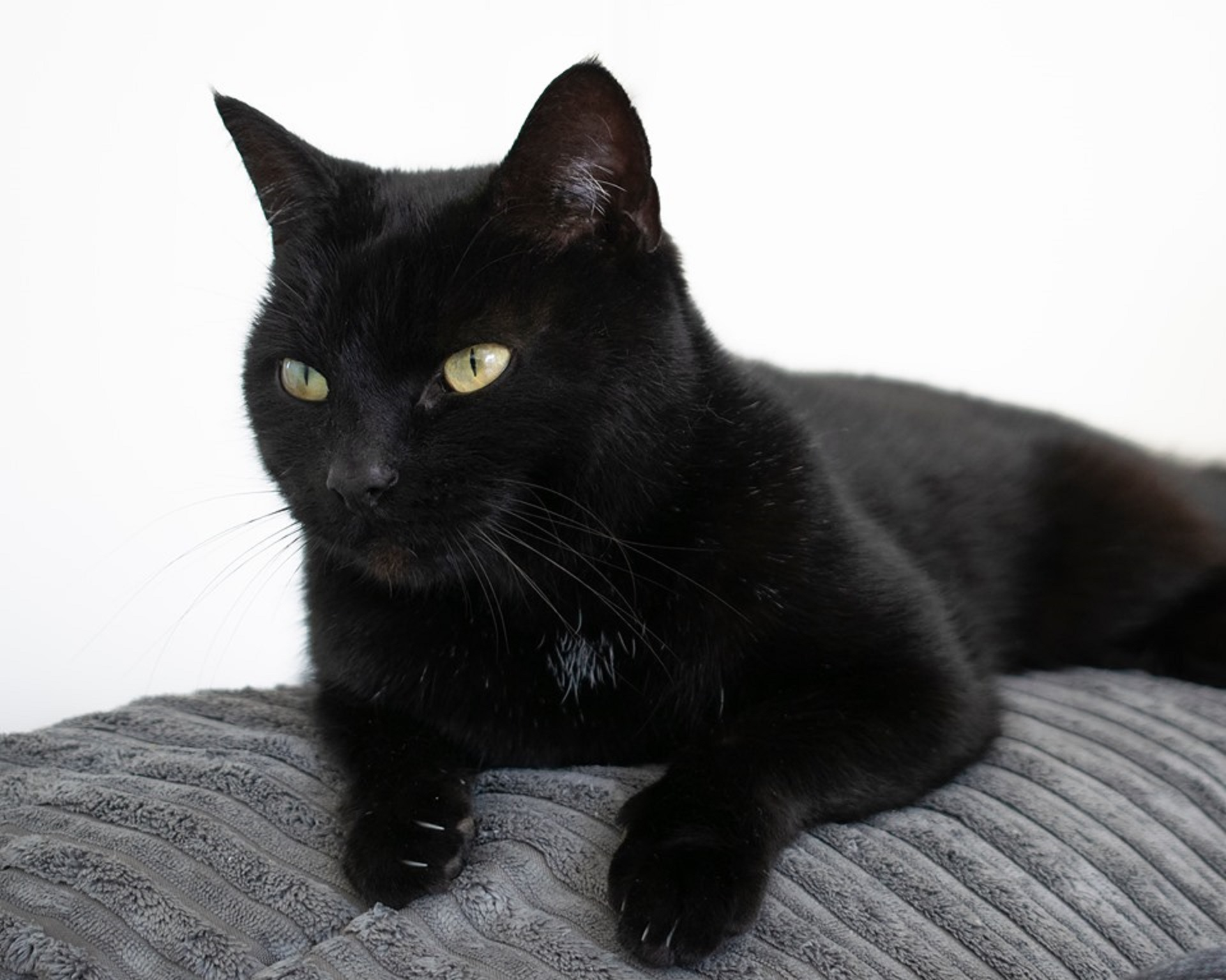 The Connolly family's pet cat Lola had to be put to sleep following a suspected poisoning.