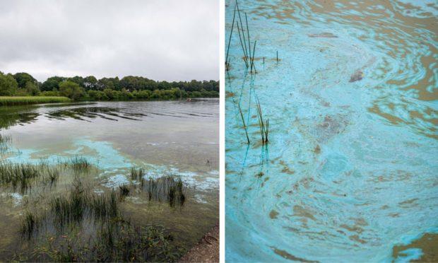Toxic algae has appeared in Loch Leven,