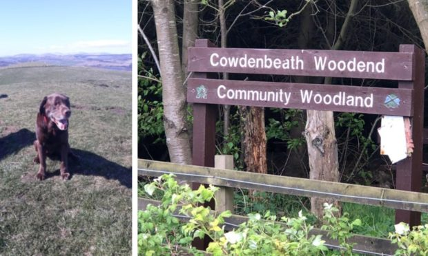 Ollie became unwell after the visit to Cowdenbeath Woodend Community Woodland.