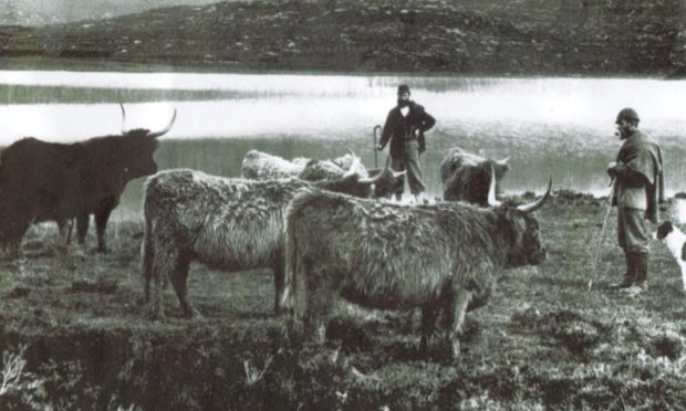 Highland drovers in the early 20th century.