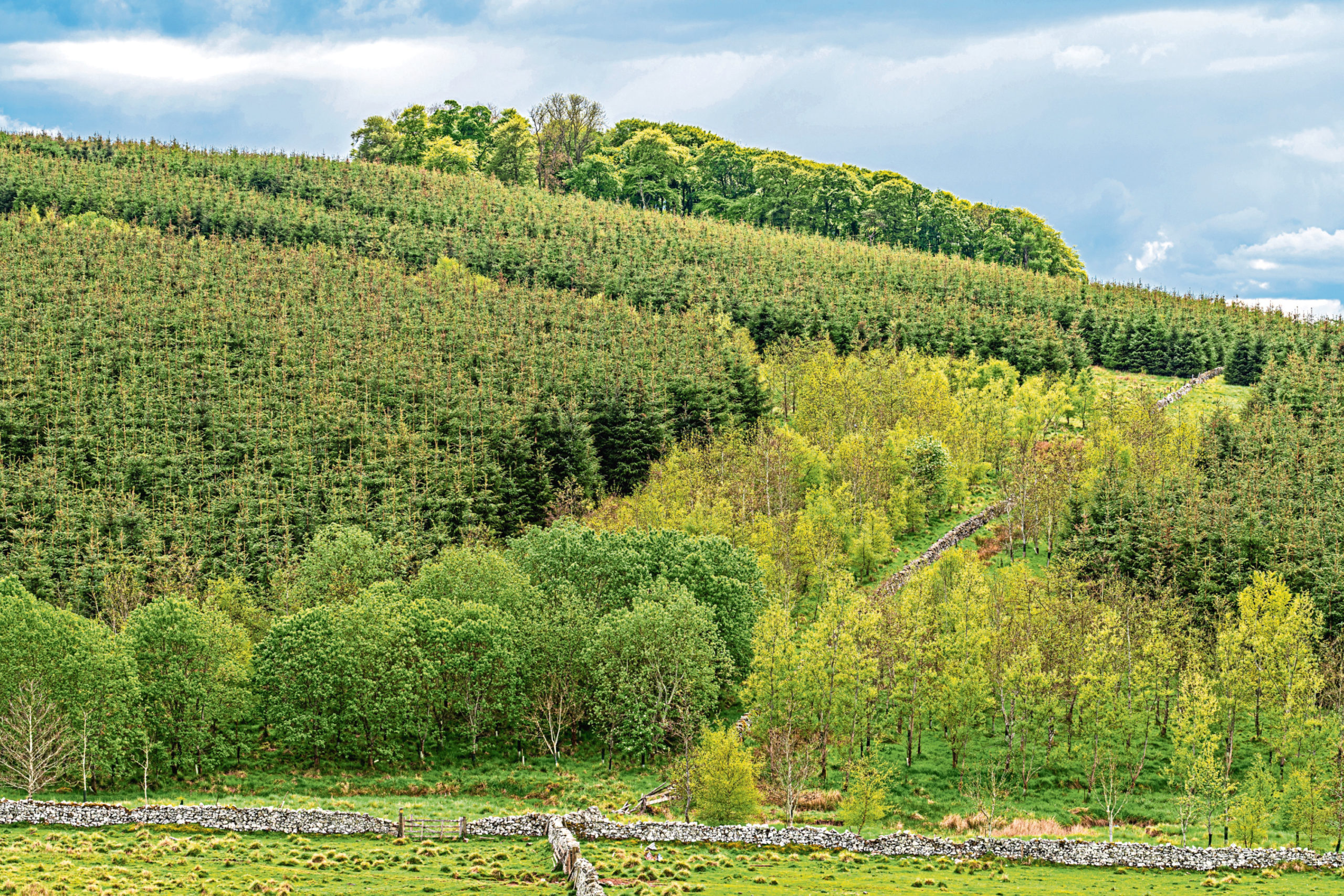 A £1 million cash pot is being offered to encourage interest in forestry.