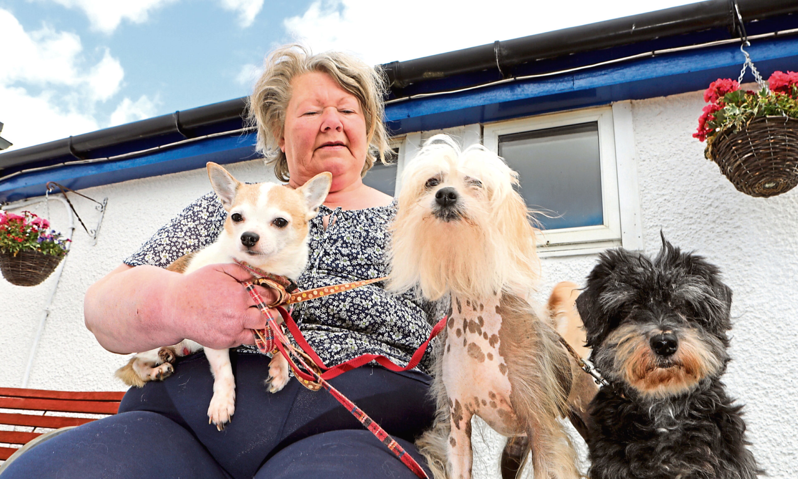 Carron Jenkins of Happas Canine Centre with Buttons, Malti and Zara - three dogs dumped at the Forfar kennels in 2018.