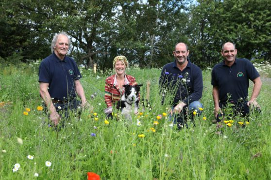 L/R,  Alan Davie - Owner of Alan Davie Transport, Jani Morton with Kodie the dog, Ian Davie and Euan Davie in the wildflower meadow