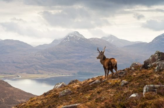 Highland Game's export sales have slumped by 75%