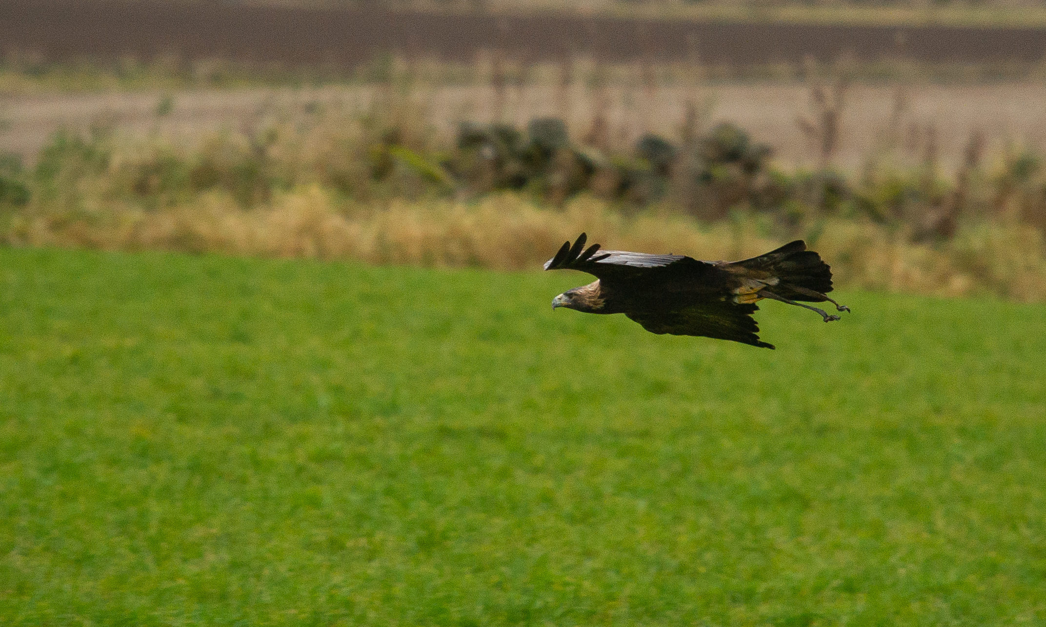 The calls come after it was announced another golden eagle has gone missing in Perthshire.