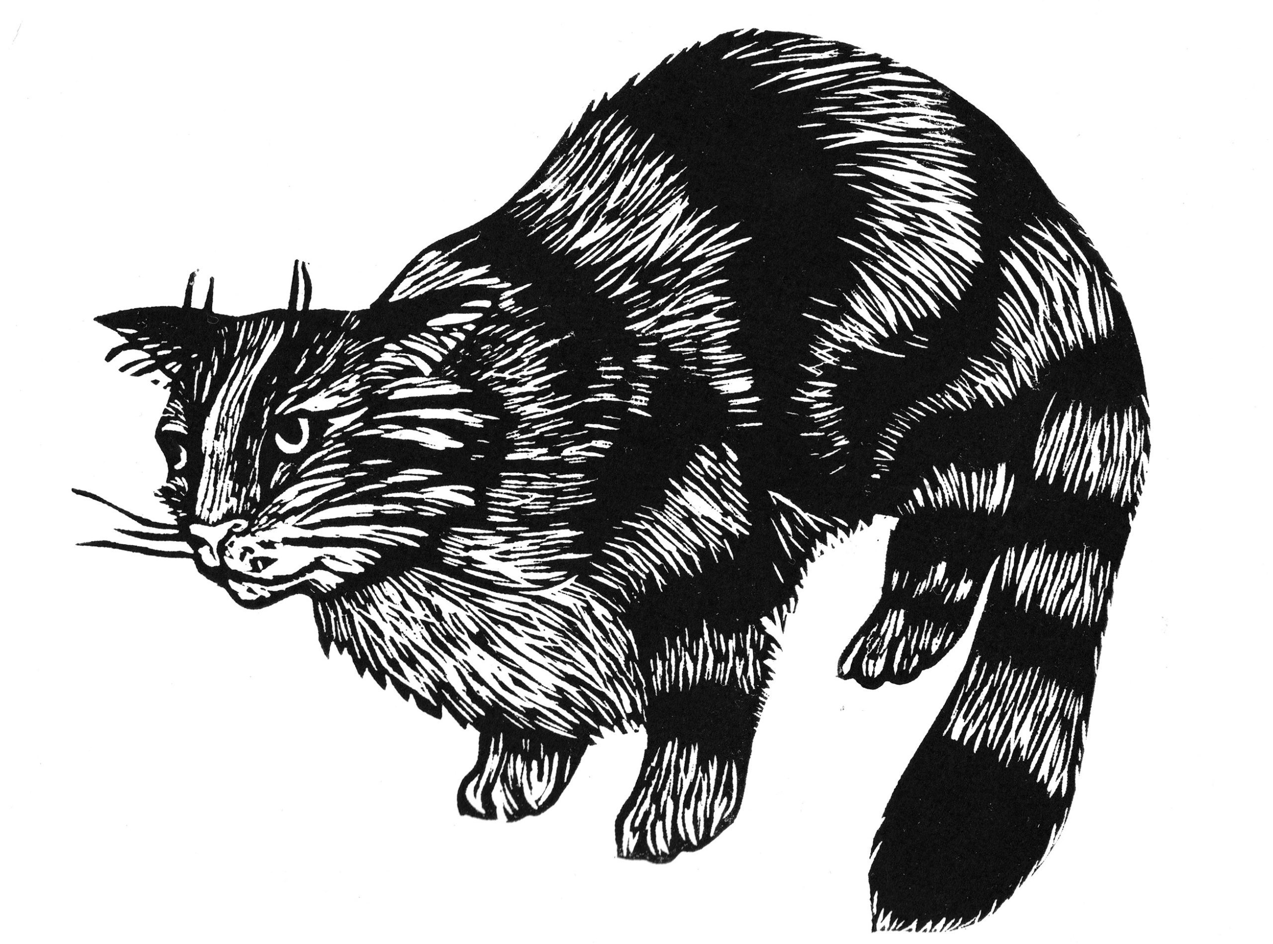 Kellas Cat - a large black cat found in Scotland, named after the village of Kellas, Moray, where it was first found.