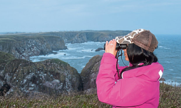 Gayle looks for puffins at the Bullers of Buchan.