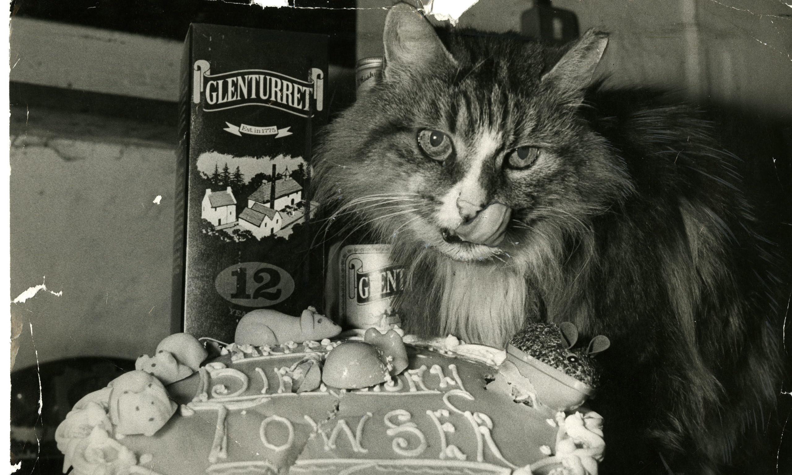 Towser - the iconic mouser-in-chief at Glenturret Distillery - celebrating her 18th birthday in 1981. She lived until the ripe old age of 24.