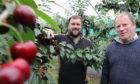 Euan McIntyre and his son Matt at Wester Essendy farm, Blairgowrie.