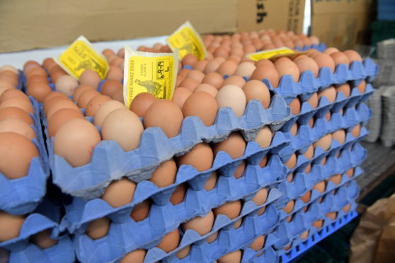 Egg prices are down by as much as 10% in major egg-producing member states