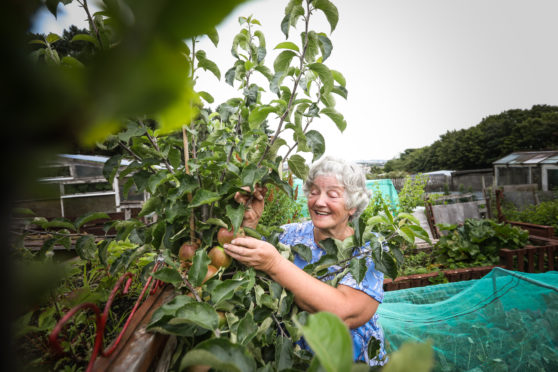 Linda Adams in her allotment.