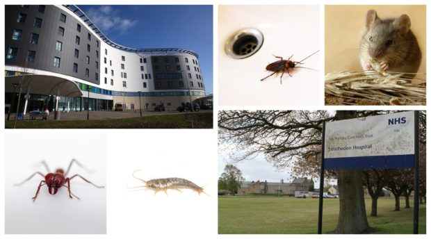 Ants, silverfish, cockroaches and mice are among the unwanted visitors at hospital sites like Victoria Hospital in Kirkcaldy and Stratheden Hospital near Cupar.
