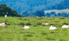 The study by Sheffield University suggested sheep farmers could be more profitable if they let their land naturally regenerate into woodland.