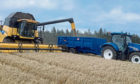 The harvest is in full swing north and south of the border