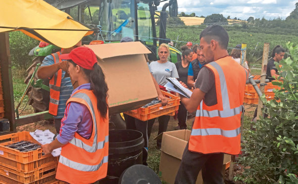 Growers in the UK are finding it increasingly difficult to secure a reliable pool of agricultural workers and pickers – and are calling for an expanded seasonal workers scheme.