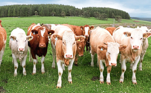 The scheme provides support towards the cost of equipment, including cattle handling and monitoring kit.