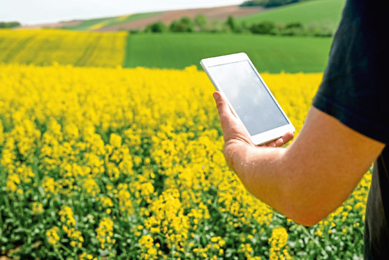 A farmer uses the recently developed CropMonitor Pro  on a tablet in a field of oilseed rape
