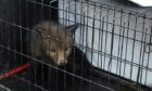 The fox cub rescued in Dunfermline has since been released back into the wild.